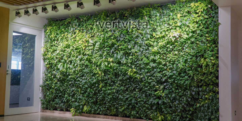 Indoor Vertical Gardens Indoor Living Green Wall Experts
